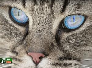 قطة أصحابها يربحون 8 آلاف دولار عن كل منشور عبر حسابها (صور)