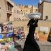 إحباط أكثر من 40 ألف محاولة للهجرة غير القانونية في المغرب