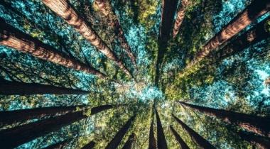 علماء بوكالة ناسا يتوصلون لطريقة جديدة لرسم خرائط الأشجار !
