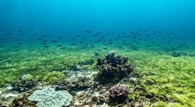 علماء يسعون لسبر أغوار الأعشاب البحرية المفيدة في تخزين الكربون